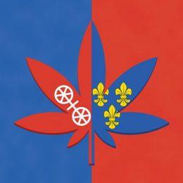 Sagbloss_Cannabis